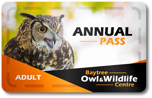Adult Annual Pass