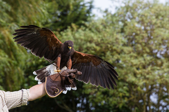 bird of prey experiences and owl experience days at baytree owl and wildlife centre