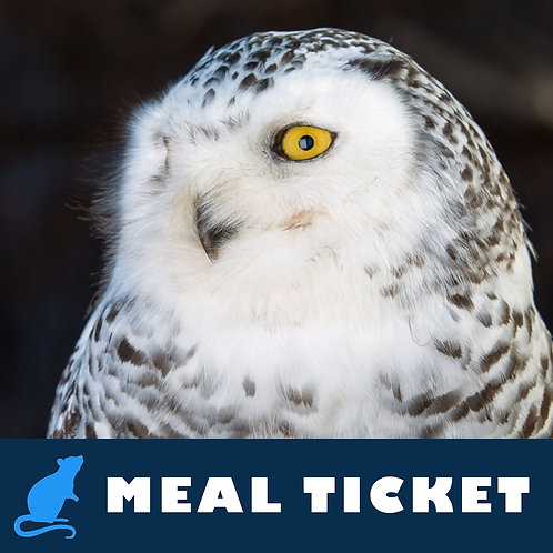 Meal Ticket - Chilli