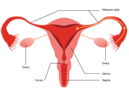 10 vagina things you need to know
