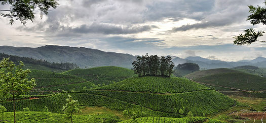 Munnar-hills-tour-packages-kerala.jpg