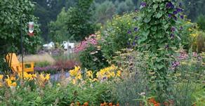 What is Eco-Friendly Landscape Design?