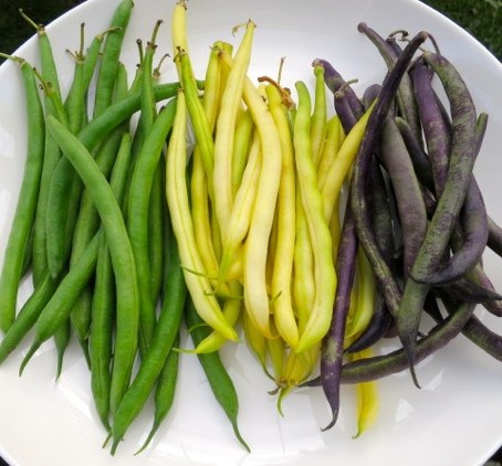 4 EASY VEGETABLES TO START FROM SEED DIRECTLY IN YOUR GARDEN