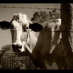 Flickr - Rural