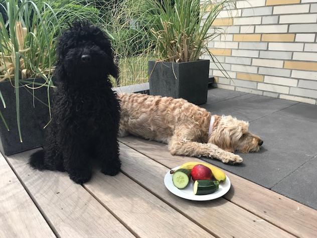 Mein Hund frisst so gerne Banane - wäre er gerne Vegetarier?