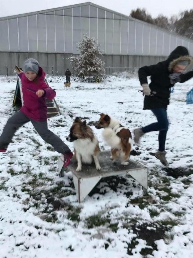 Hundesport - Schönwettersport?