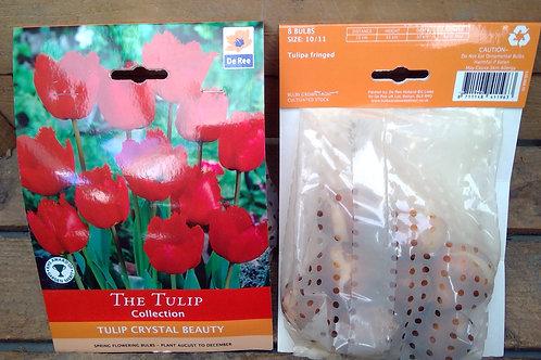 Tulip Crystal Beauty 8 bulb pack