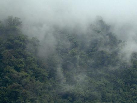 Los bosques de Kolijke