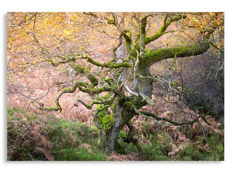 The Oaks, Holystone, Northumberland