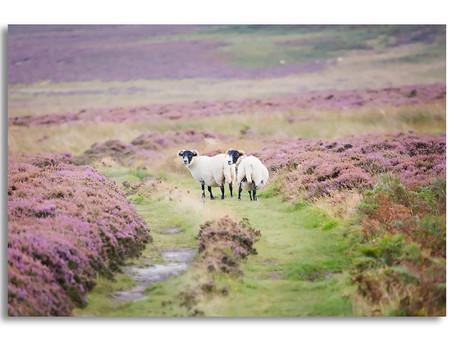 Bewick Moor, Northumberland