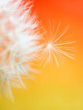 2 - Orange b.jpg