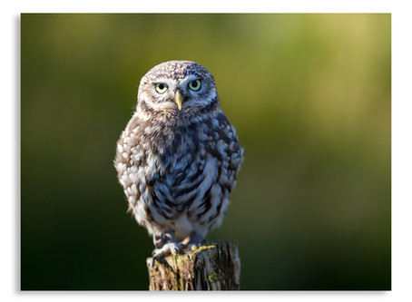 a grand day out at kielder water birds of prey centre