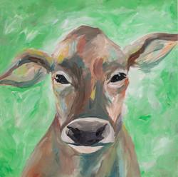 Cow Portrait