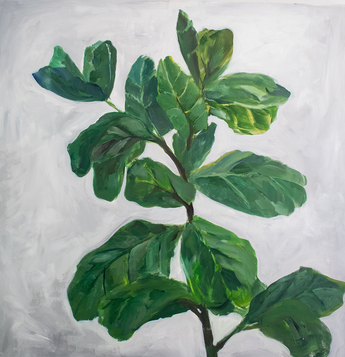 Fiddle Leaf Study
