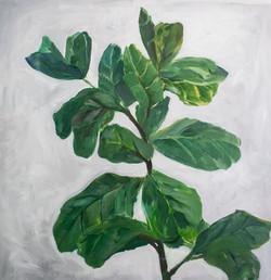 Fiddle Leaf Study