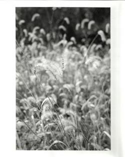 2012_Fall_33.jpg