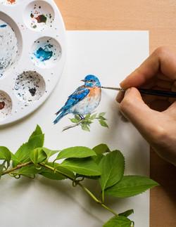 Bluebird Illustration