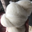 Thumbnail: Carded British Wool  Soft Felting and Spinning Wool , Core Wool