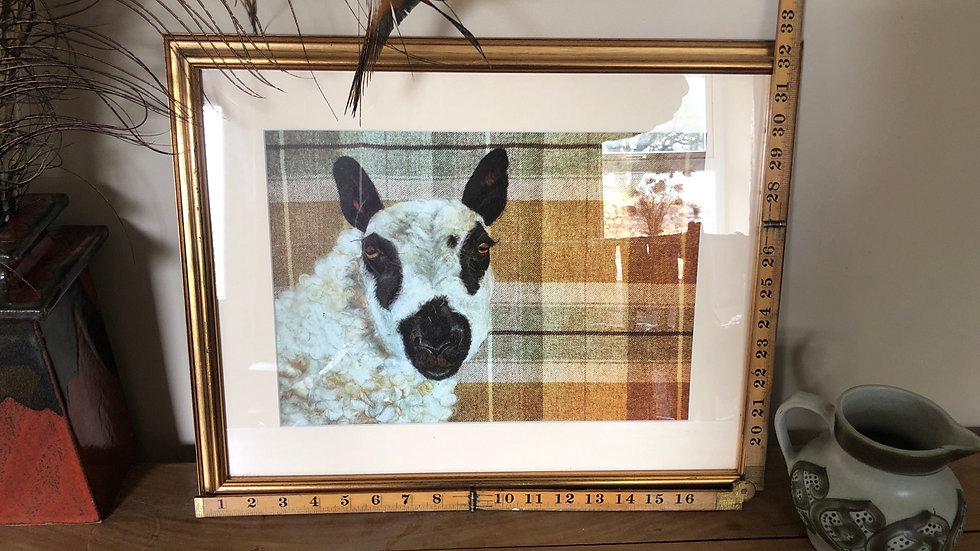 Kelly the Kerry hill framed print