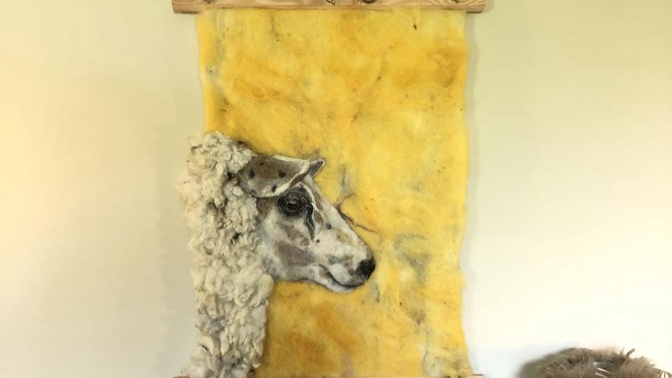 Sietta basking in sunset 100% home grown wool