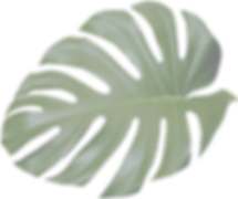 pngsee.com-christmas-leaves-png-531773——
