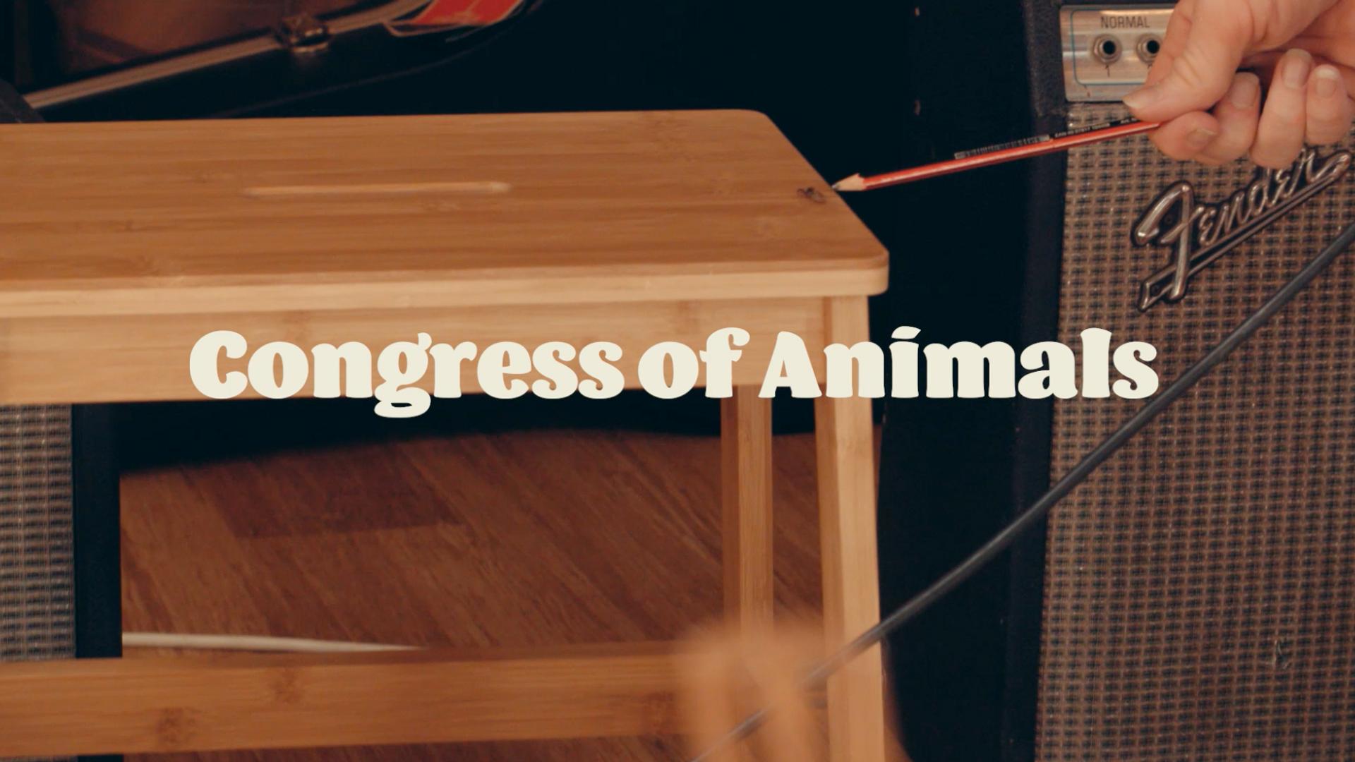 Congress of Animals spidey