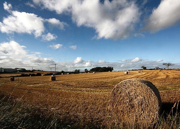 'Harvest Time'