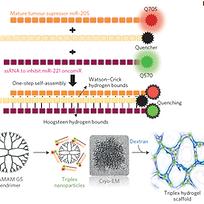 Self-assembled RNA triple helix hydrogel