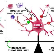 RNAi nanomaterials targeting immune cell