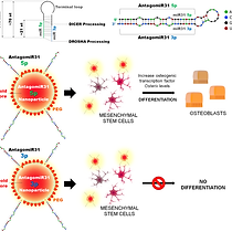 Nanoparticle-antagomiR based targeting o