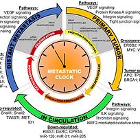 Biomaterials for Metastasis.png