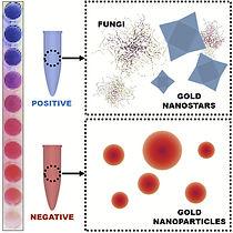 Plasmonic%20gold%20nanoparticles%20fungi