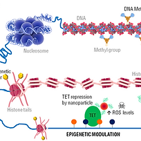 Epigenetics paper JC1_edited.png