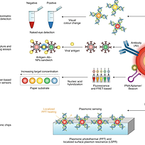 Nanotechnology-based disinfectants and s