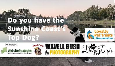 Sunshine Coast Dog Awards Hosted by Dog