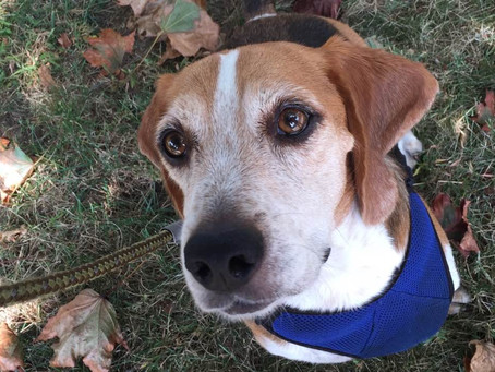 The Healing Power of Pets – In Memory of Henry