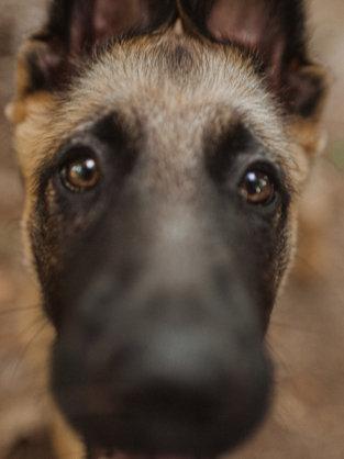 Bruno, Pet Portraits