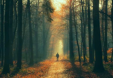 The Spiritual Wilderness