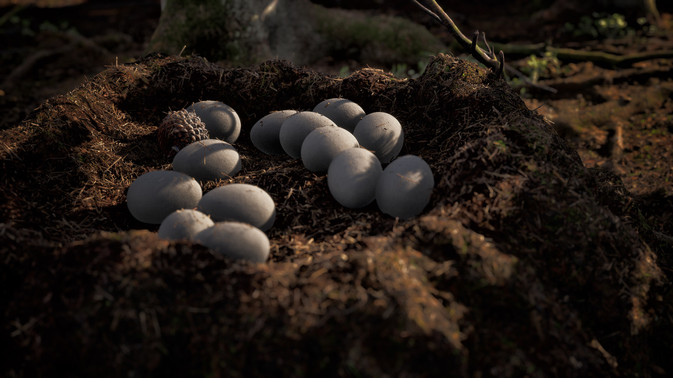 Instinction_EggsCloseUp.jpg