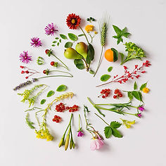 various-natural-things-neatly-arranged-i