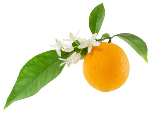 Vitamin-C Antioxidant Elixir