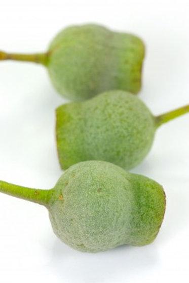 Eucalyptus Skin Softener