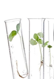 Multi-Peptide Collagen Elixir / Deepens moisture