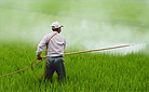 herbicide-avignon-in-rice-field-avignon-