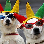 Dogs-in-clown-costumes-1.jpg