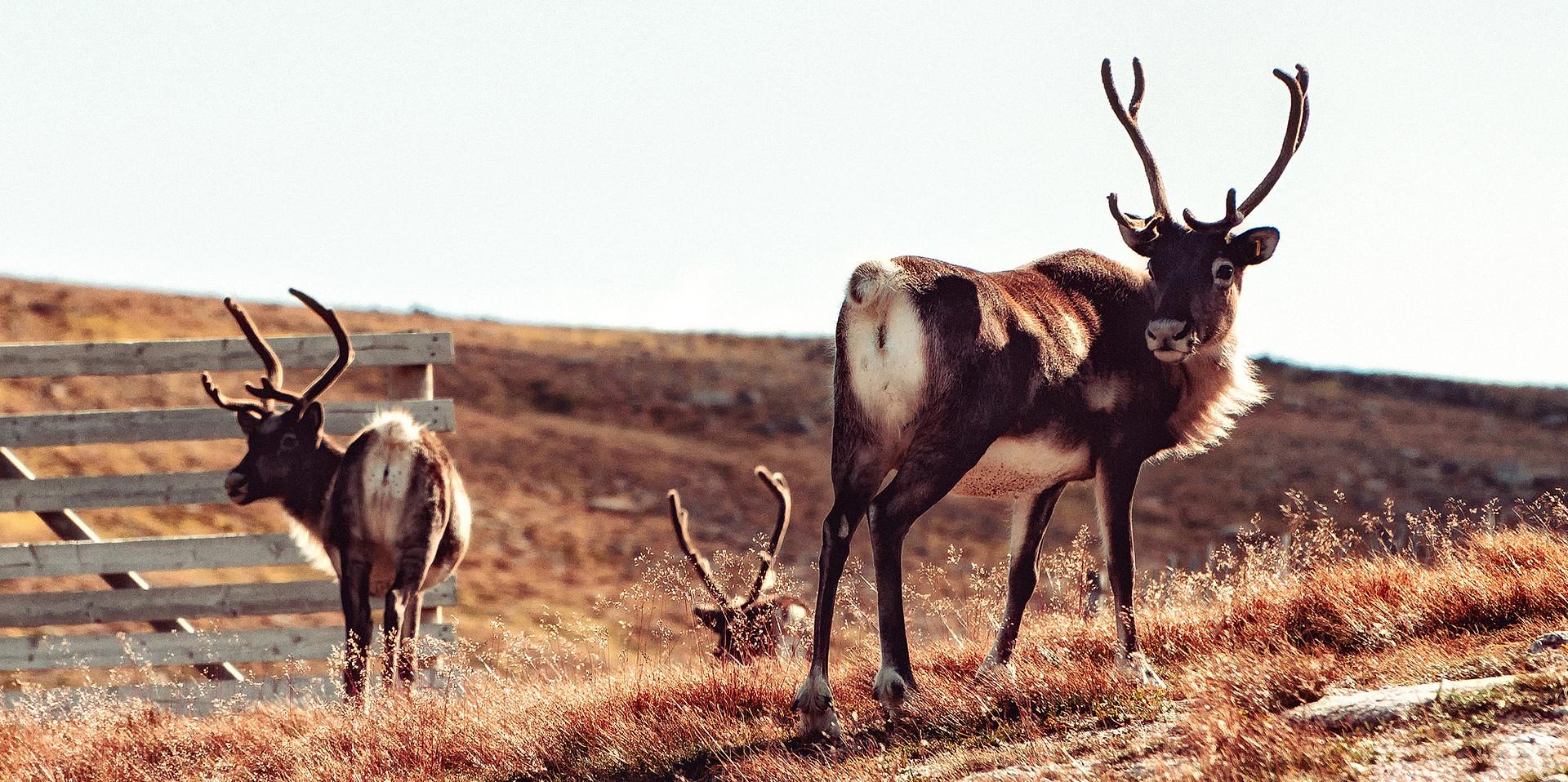 Wildlife10.jpg