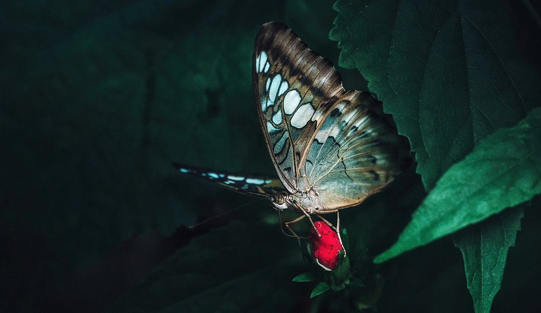 Wildlife9.jpg