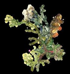 bouquet-1 edit.PNG