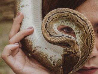 Onda Encantada de la Serpiente Roja