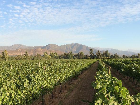Valle del Cachapoal Chile